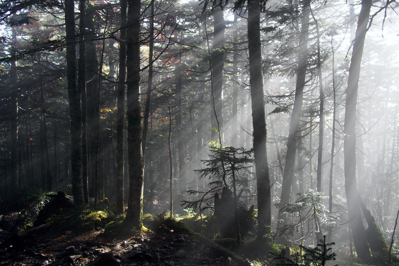 「ある光 ~なぜきみは山に登るのか~」